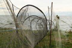 Fischerreusen_an_der_Ostsee.jpg