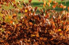 Herbst-7012.jpg