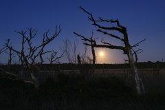 Mondaufgan über Moor
